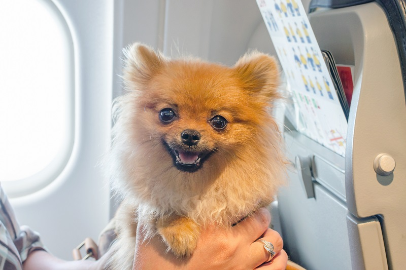 FLYING NEXT TO FIDO: HOW BUSINESS TRAVELERS COPE