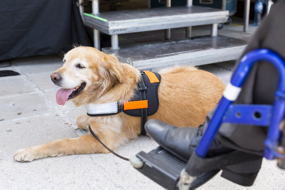 Service Animals on Flights: Ferreting out the Truth